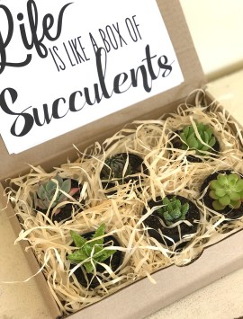 Digital-Product-tldc-succulents-1