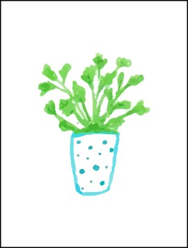 plant-succulent-range-4-single